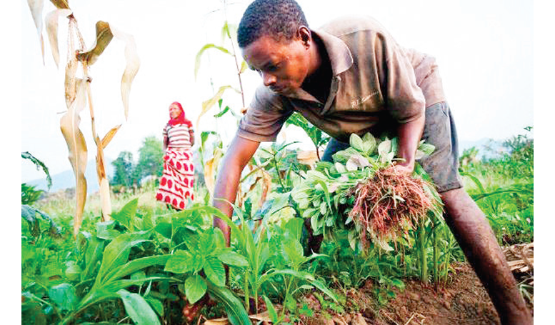 Blueprint on Development of Agric Sector Will Soon Be Unveiled – Minister