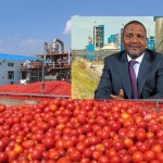 Dangote Tomato plant begins production