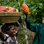 Nigerian state partners Chinese firm on cocoa production
