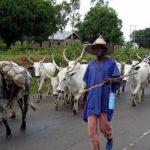 Benue Christians drag Fulani herdsmen to Human Rights Commission over killings