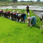 Group Charges FG On Youth Empowerment In Agriculture