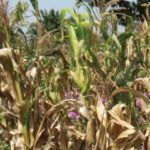 Agric Sector Stakeholders Commend FG on NEGPRO scheme