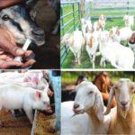 Ekiti should go back to agriculture – Gov aspirant