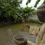 Expert Urged Catfish farmers to export produce