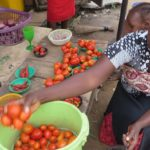 Pests and drought hit Nigeria's tomato farms