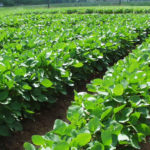 Anambra Records U.S.$5 Million Vegetable Exports to Europe