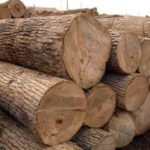 FG issues guidelines on wood exports