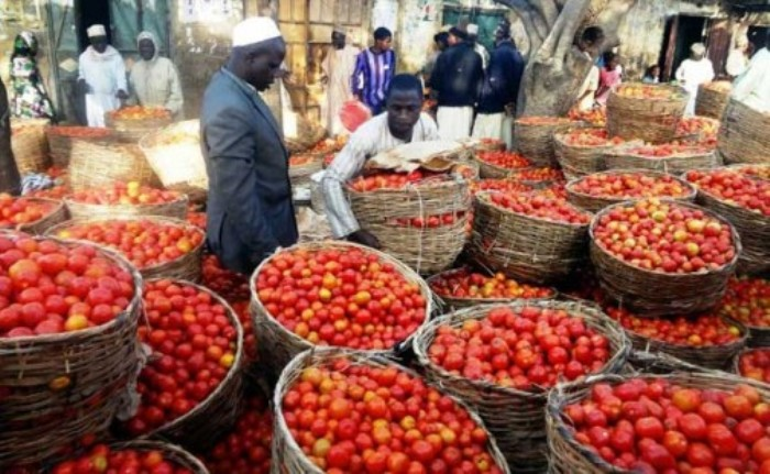 Canadian grower to assist Nigeria with 'tomato Ebola' crisis