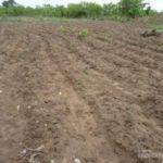 Ogun farmers accuse land grabbers of encroachment