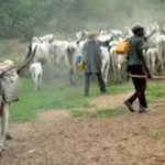 Fulani herdsmen reject Fayose's anti-grazing law