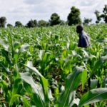 Agric Stakeholders Brainstorm on Reversing Economic Recession at NAAJ Workshop