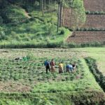 AfDB to invest $24 billion in agriculture in Africa – Adesina