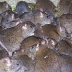 Lassa fever kills one in Enugu