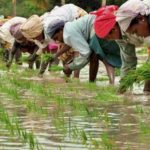 4,172 Farmers Receive Agric Credit Guarantee For N499.22m