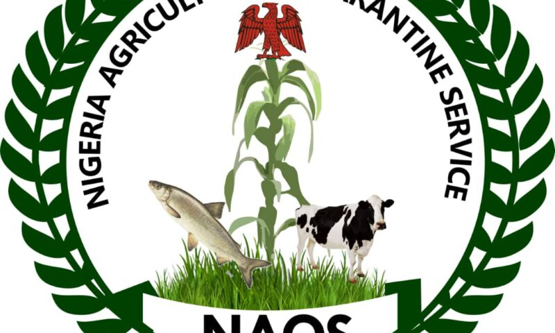 Sustainable Trade in Donkey Skin Is Of Primary  Concern To NAQS – Isegbe